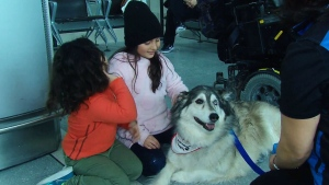 Pearson Airport has hired therapy dogs