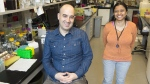 Peter Stogios, Research Manager, BioZone Protein Crystallization Facility Department of Chemical Engineering and Applied Chemistry and Research Associate Meena Venkatesan in their lab at the University of Toronto on Wednesday, Feb, 20, 2019. (THE CANADIAN PRESS / Frank Gunn)