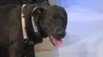 Pet of the Week: Luna