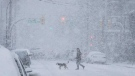 A person walks a dog as heavy snow falls in Vancouver, on Feb. 10, 2019. (Darryl Dyck / THE CANADIAN PRESS)