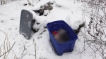 The SPCA says a mother cat and three kittens were found dead inside this tote box in the Albro Lake Park area of Dartmouth on Feb. 21, 2019. (Nova Scotia SPCA)