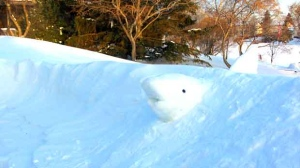 "Having fun with the ""great white"" snowdrifts that blew in this weekend! Photo by Brian Drews."