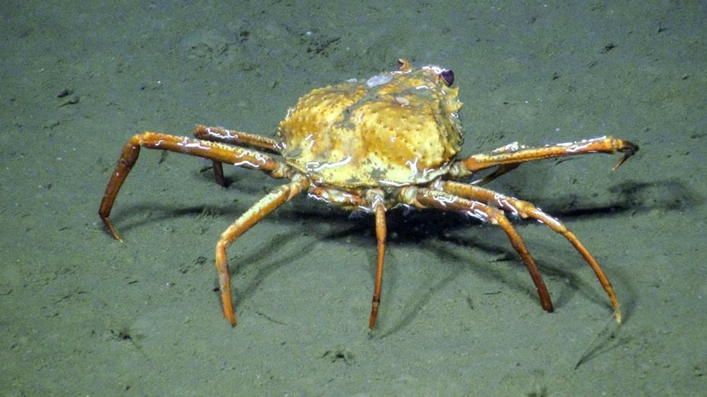 crab eating methane ocean