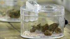 Cannabis sales - 420 Premium Market