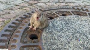 Trending: The Fat Rat