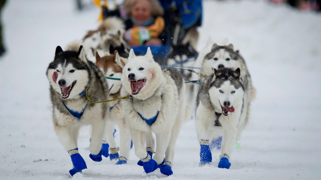 Dog that completed Iditarod sled race dies of pneumonia