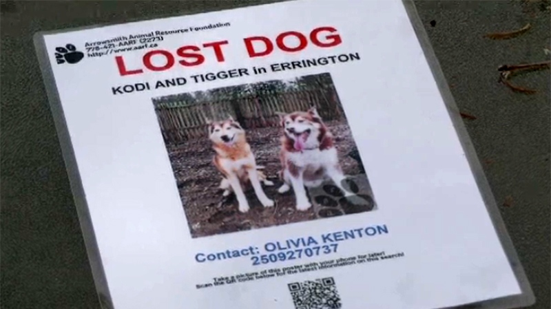 Kodi and Tigger were the subject of a large community search when they went missing in December. (CTV Vancouver Island)