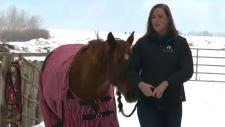 calgary, equine therapy, prairie sky equine assist