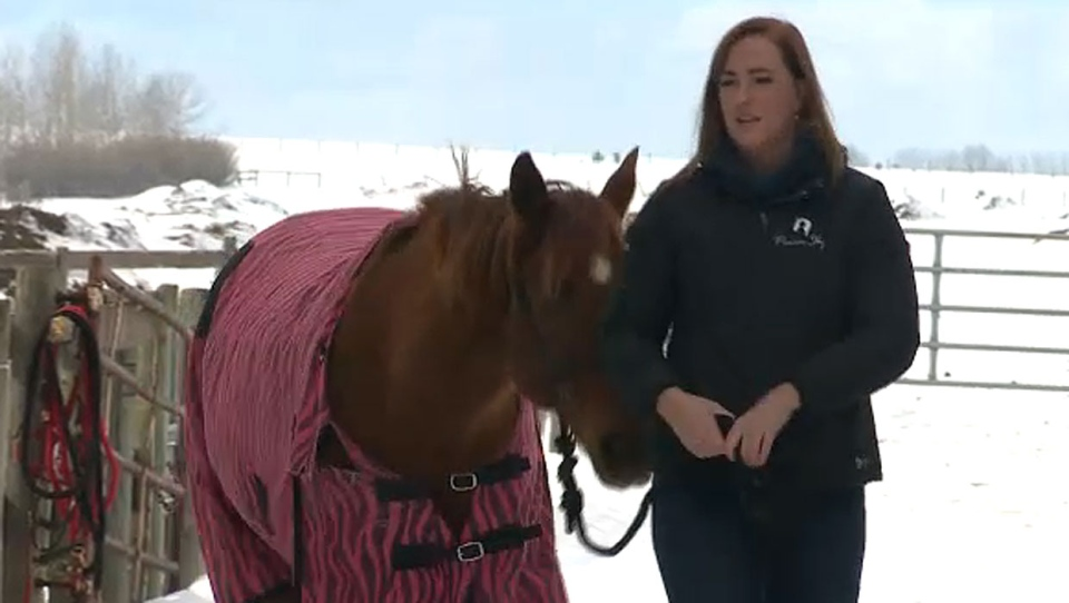 Jessica Van Der Hoek, president of Prairie Sky Equine Assisted Therapy, wants to share the success she had in battling her own inner demons with her colleagues.