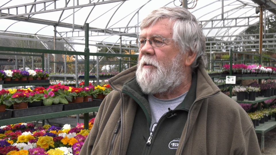 Garden centre owner John Derrick says he has been unable to move flowers to his outdoor spaces due to the cold. (CTV Vancouver Island)