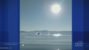 Trending: Whale watching