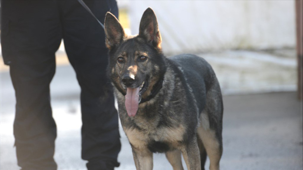 police dog doodz retiring