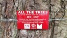 A plaque on a Vancouver tree is shown in a photo posted to Twitter by the city's park board in August 2008.