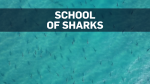 Drone footage shows massive school of sharks
