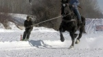 Feel like skijoring?