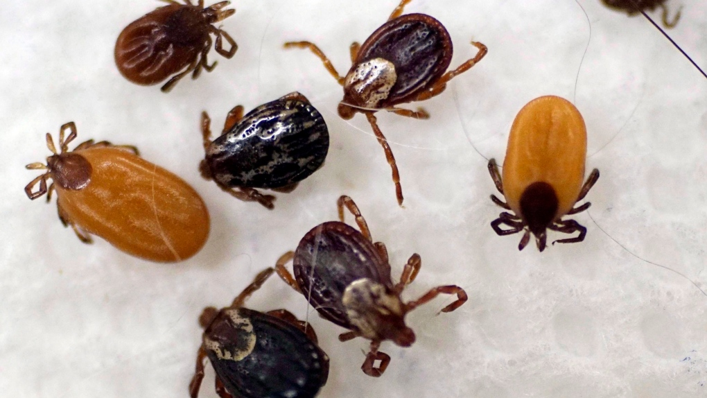 Canadian experts say prolonged antibiotic treatment for Lyme disease 'harmful'