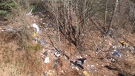 Garbage is strewn along a steep hill under the Clark Drive overpass.