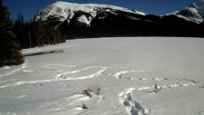 An Edmonton man wrote an SOS message in the snow after he could not return from a camping trip at Pinto Lake, in Clearwater County, Alta. (Courtesy: Facebook / Rocky Mountain House Search & Rescue)