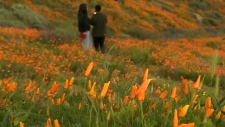 Selfie seekers cause superbloom shutdown