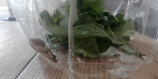 Lethicia Benedicto said she discovered a small live frog in a plastic Fresh Attitude brand spinach container.