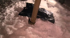 The SPCA in Montreal has opened an investigation after a dead dog was found in a snowbank, tied to a tree. (CTV Montreal)