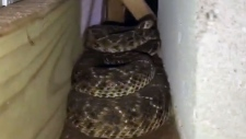 45 rattlesnakes found under a Texas home