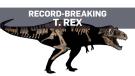 T. rex