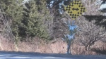 A memorial featuring three white candles, and three colourful butterflies marks the spot where a vehicle left the road and went into a wooded area before catching fire early Saturday morning.