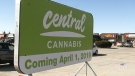 Last-minute prep underway at first London pot shop