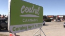 A billboard for Central Cannabis, a pot shop opening in London, Ont. is seen on Monday, March 25, 2019. (Sean Irvine / CTV London)