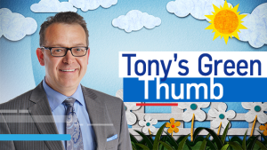 Tony's Green Thumb