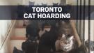 Volunteers find over 100 cats in Toronto home