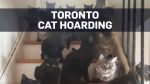 Volunteers find over 100 cats in Toronto home