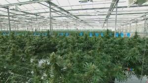 Seth Rogen to launch cannabis brand 'Houseplant'