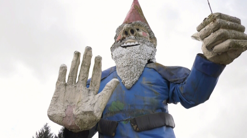 Howard the gnome, who has stood by a stretch of highway in Nanoose Bay for 21 years, is getting a new lease on life and long overdue refurbishment on a farm.