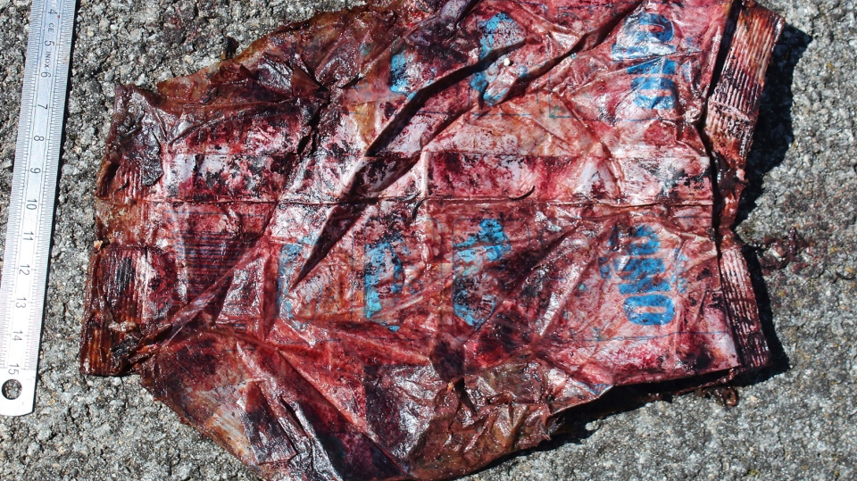 WWF sounds alarm after 48 lbs of plastic found in dead whale