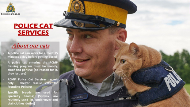 B.C. RCMP receives application for fake Police Cat Service