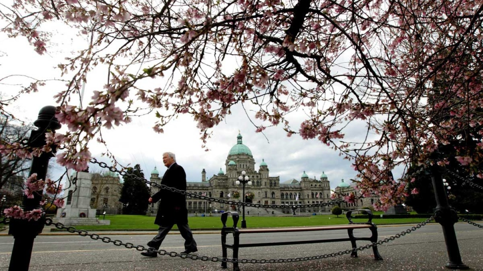 The British Columbia Legislature is framed by cherry blossoms as a pedestrian passes by in Victoria , B.C., on March 2, 2010. (Darryl Dyck / THE CANADIAN PRESS)