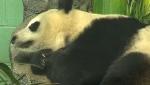 More cubs for Er Shun?