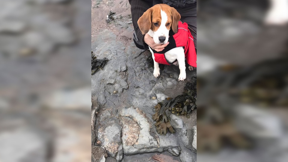 "Since becoming her owner, Jordan said he's been training Crystal to sniff out the organic material left inside of some prehistoric bones which can give off a ""noxious smell.""  (Fossils Galore)"