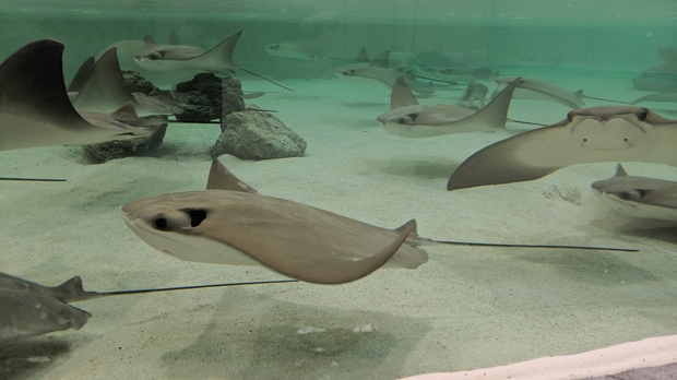 Supplied image of the Stingray beach exhibit.