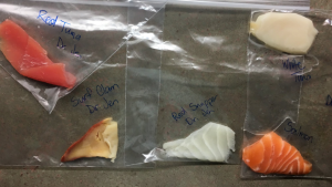 Samples of fish labelled in plastic bags are seen in this photo. Jennifer McDonald's biology class at Fanshawe College in London, Ont., tested nine types of fish. Seven were mislabelled. (Source: Jennifer McDonald)