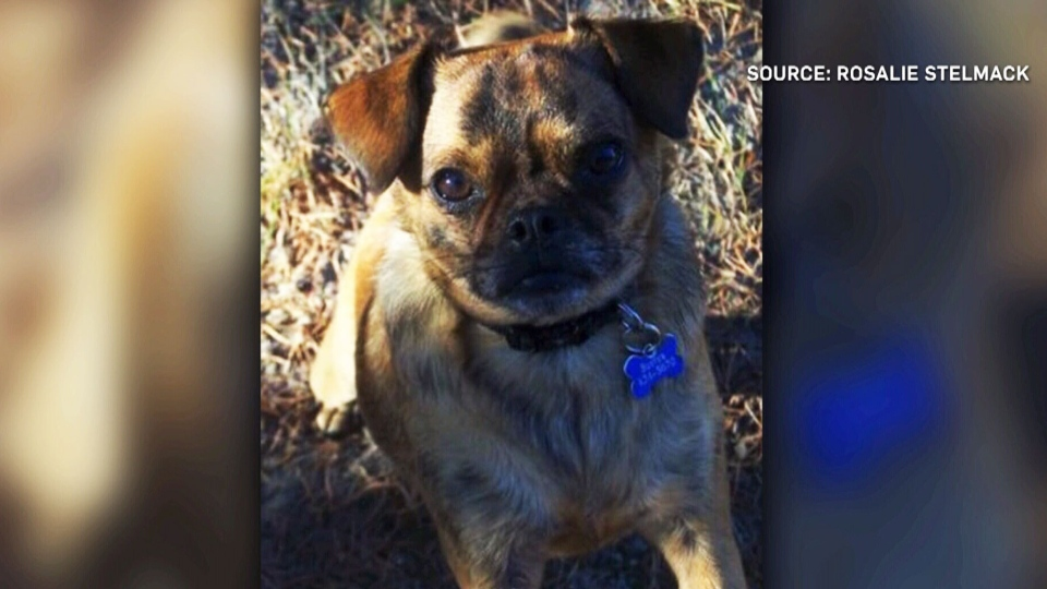 Buster, a dog believed to have been poisoned in Manitoba, is seen in this image.