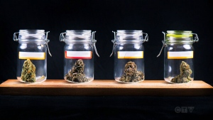 Pricey pot may be killing the buzz
