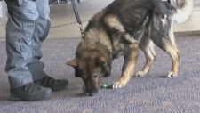 One of Sudbury's two police K9 units was out meeting members of the public over the weekend.
