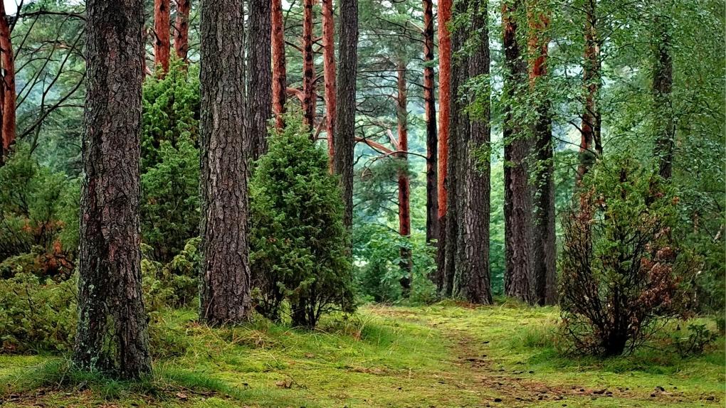 Fontenelle Forest's TreeRush Adventures