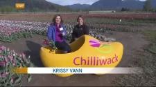 Exploring the Chilliwack Tulip Festival