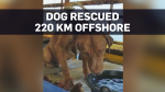 Dog rescued 220 km off the shore of Thailand
