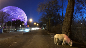 It's not a photo of a fantasy landscape: a very real little horse with a pink mane and a bridle has been spotted several times over the last few days, wandering Ile Sainte-Helene and perplexing passerby. (Photo courtesy 'Sauvons le mini-cheval'/Facebook)