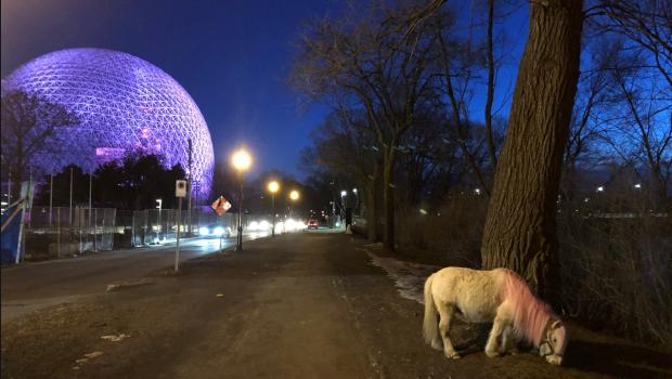 Big search, little pony: Mini-horse with pink mane seen wandering on Ile Sainte-Helene
